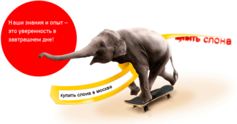 купить слона в москве